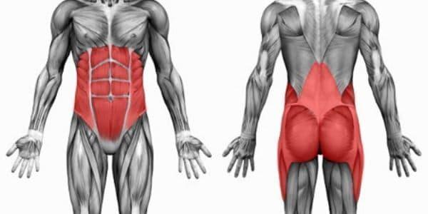 los músculos del core