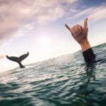 shaka el saludo surfer