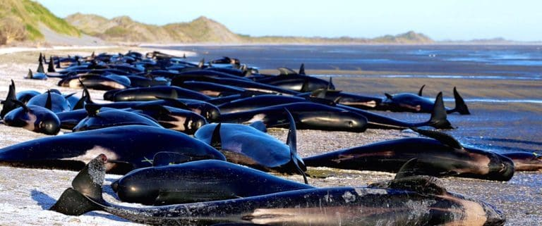 Catástrofe en una playa de Nueva Zelanda