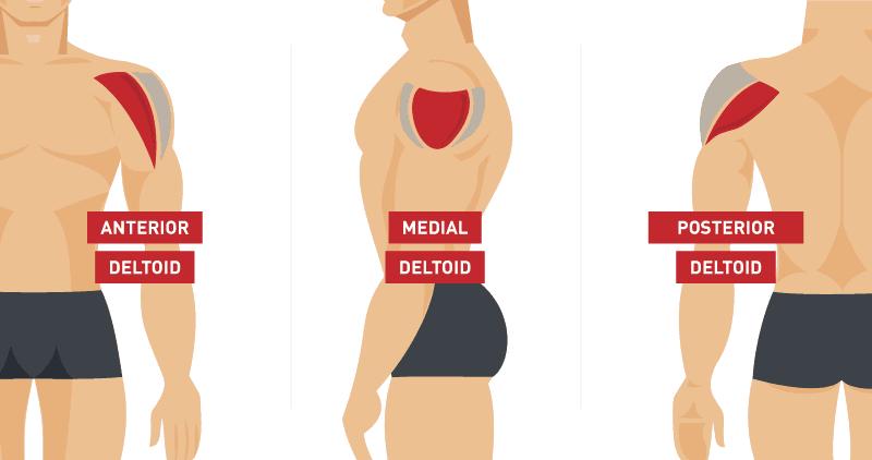 5 ejercicios para tener unos hombros fuertes para el surf