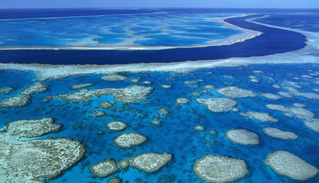 Gran Barrera Coral Gold Coast Australia