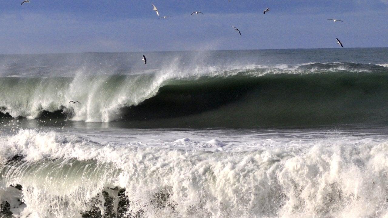 surf el brusco